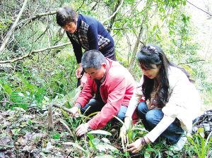 福建建瓯兰花爱好者在世界上最大的人造古森林种植兰花