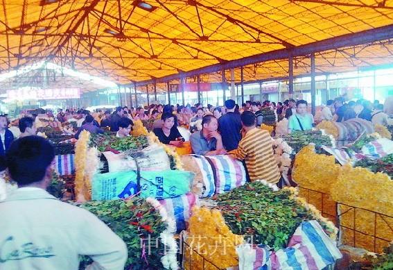 广东:清明节白色黄色切花菊大量上市