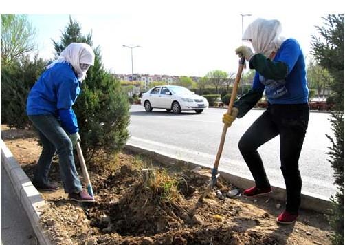 甘肅省肅州區城市園林綠化重新補植花灌木