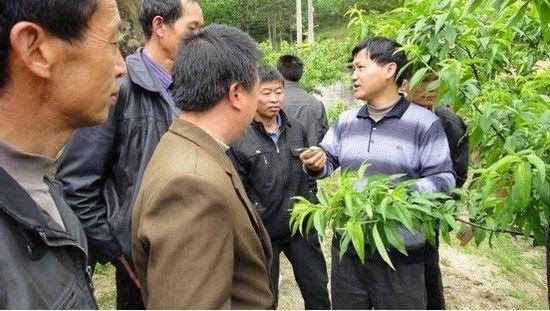 县农业局果树专家现场给残疾人学员讲解黄桃栽培技术