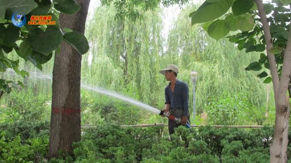 园林工人抗旱保绿