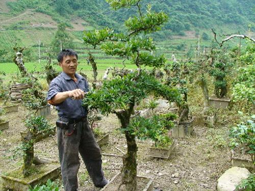 重庆:石柱县中益乡返乡民工建6亩花木盆景苗圃