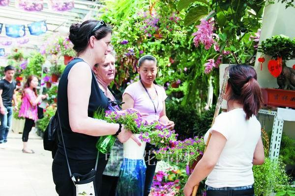 北京:舞春花開花密 花量多 花期久 在京受寵