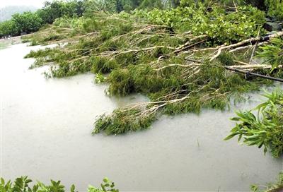 珠海淇澳岛红树林两万多株树木倒折