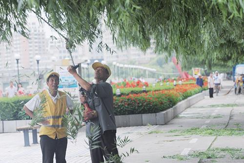吉林:绿化处人员修剪江边柳树 拓宽市民视野