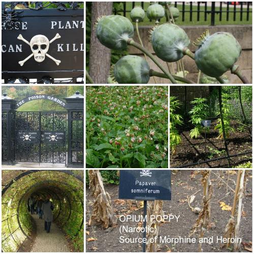 英国毒物花园开园迎客 展出各类有毒植物
