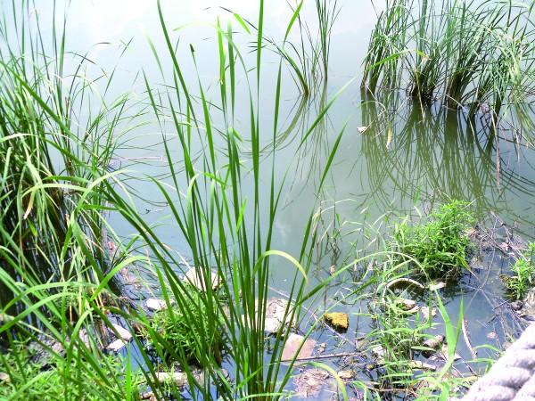 对于市民十分期待的绿岛生态湿地公园的正式开放,相关部门表示具体