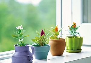 在家中养盆栽茶花,如果管理不当,很容易出现枯死现象