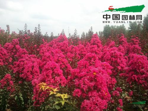 山东东园生态农业有限公司苗圃基地