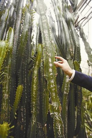 单身游客刻字招友 深圳仙湖植物园植物很受伤