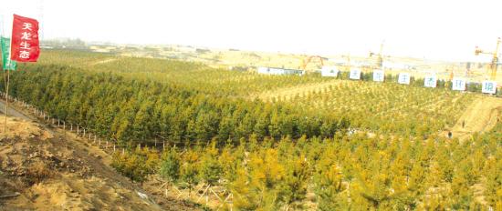 内蒙古:天龙生态争做G6高速绿化先锋
