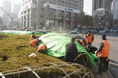 青海西宁:让植物温暖过冬