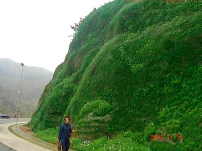 青岛世园会园区及周边区域共有30多处裸露山体,分别采取(cbs植被