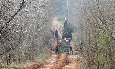 """扬州""""站前山""""原生态山林正被毁 乡土树种全市罕见"""