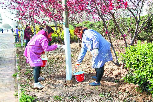 河南鹤壁淇滨区栽植苗木1320万余株造林12万亩