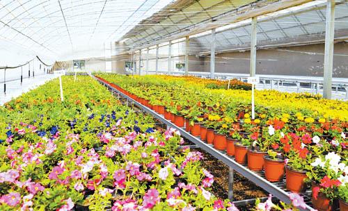 壁纸 成片种植 风景 植物 种植基地 桌面 500_304