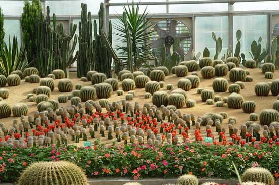 北京:温室植物园里异彩纷呈