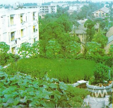 种植屋面,稻田和荷花池也搬上了屋顶,成都的一大特色