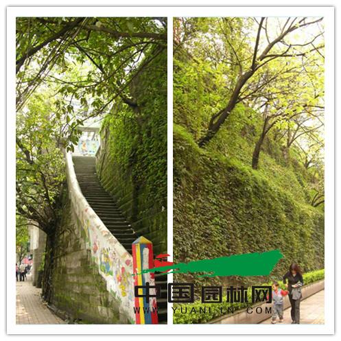 挡墙绿化效果图