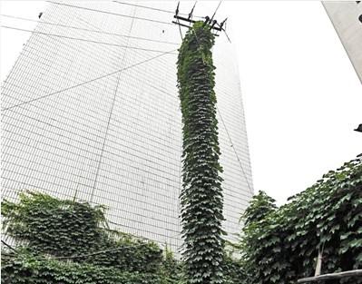 安徽芜湖:寻找爬上墙的绿色风景