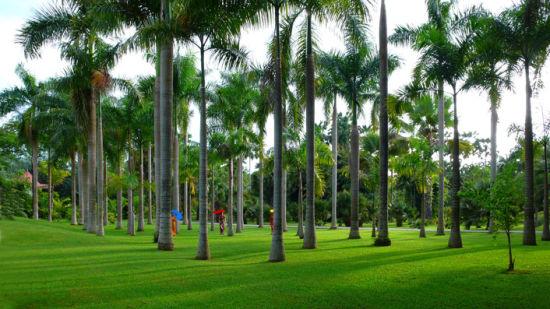 正文   西双版纳热带植物园位于云南省西双版纳傣族自治州勐腊县勐仑