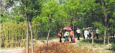 绿地游园建设给市民提供了更多游玩休憩的好去处。本报记者 许大桥 摄