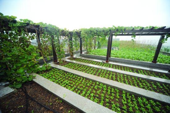 屋顶菜园设计效果图