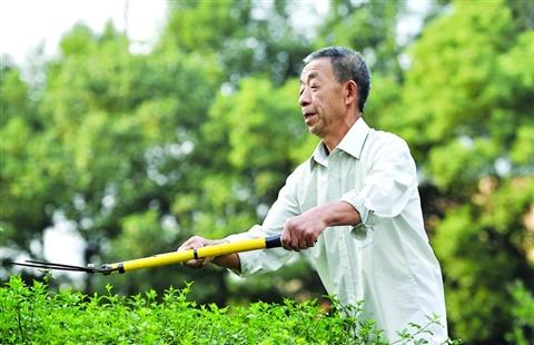 月季;十多个平方米的花圃中,种植了枇杷树,桃树,也早已绿树成荫,树根