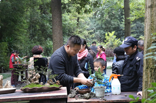 四川:园艺课程开展小学制作盆景教案活动体验阅读理解草堂小学图片