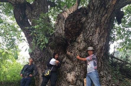 资讯生活云南:迪庆州德钦县林业局开展核桃古树调查