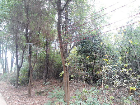 长沙:星沙文化公园滥砍树木建停车场