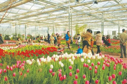 黑龙江:齐齐哈尔北大荒鹤城鲜花港春意满园