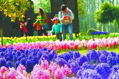 """武汉:周末植物园邀您去赏""""百花斗艳""""- 园林资讯"""