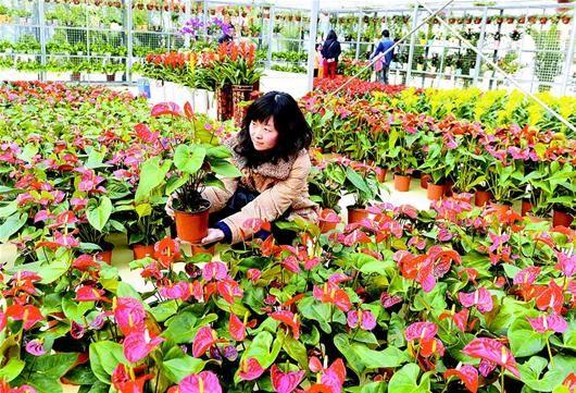 顾客选购花卉