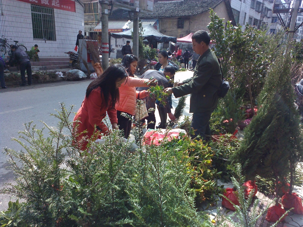 群众纷纷前来购买各种苗木