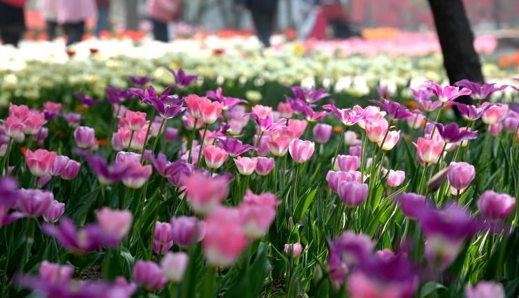 清明后的省会石家庄已有了初夏的感觉,石家庄市植物园内绿高清图片
