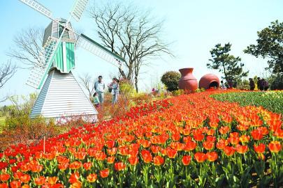 山东:日照植物园27万株郁金香竞相开放成靓丽风景