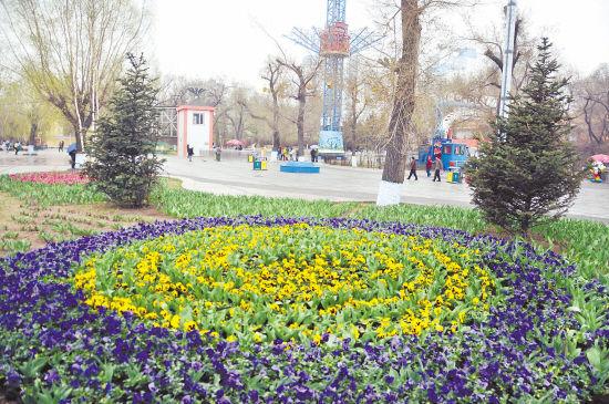 文化公园鲜花绽放