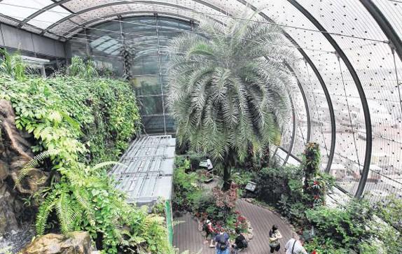 第三航站楼离境与过境厅的蝴蝶园占地100平方公尺,里面有37个品种、约1000只热带蝴蝶。