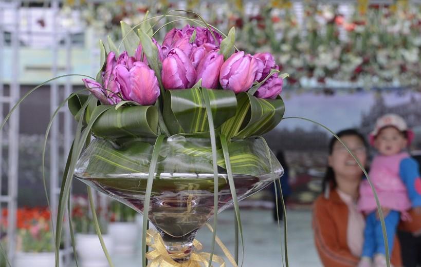 """荷兰""""国泰""""郁金香落户北京国际鲜花港,助力第五届北京郁金香文化节,首次与游人见面。"""