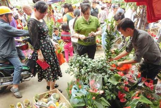 市民购买花卉盆栽