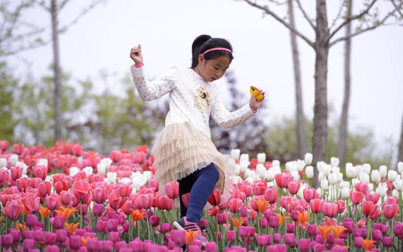 北京国际鲜花港,一小朋友在郁金香花丛中跳跃。