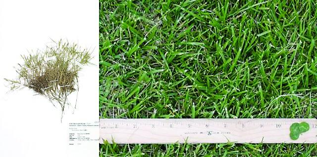 世界杯足球场草坪的养护