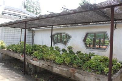 盆景防晒是夏日养护的重要功课