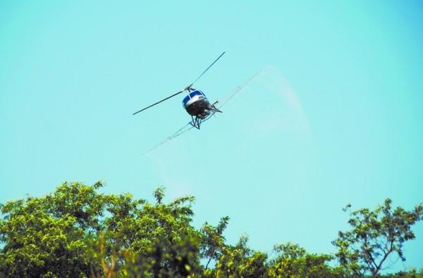 飞机在青岛空中喷洒农药,防治白蛾