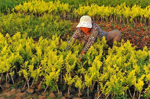 山东青州:花草苗木进入忙碌期