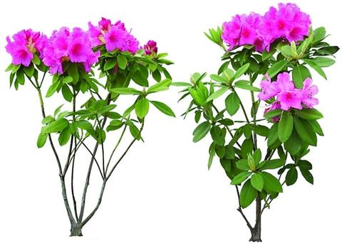 花卉生长期中的修剪方法