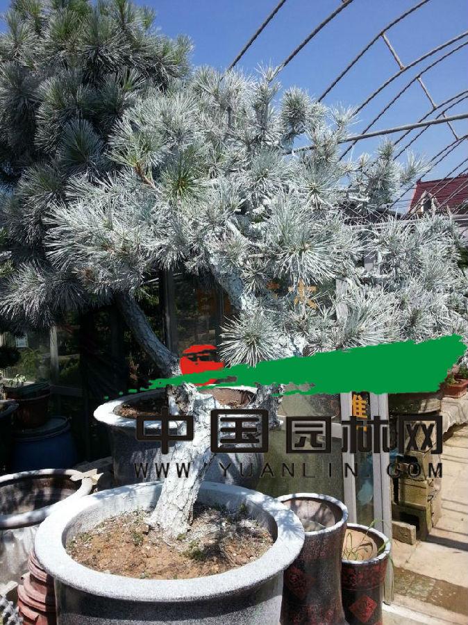 高温季节积极做好病虫害防治工作