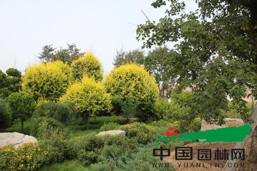 全国苗乡行考察团走进中国(昌邑)北方花木城