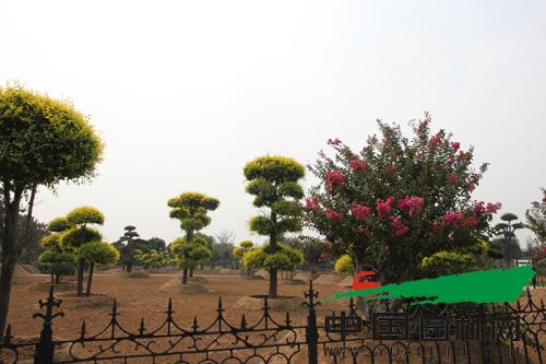 中国(昌邑)北方花木城作为第三代花木产业综合体项目,依托昌邑的产业